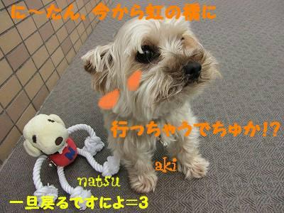 IMG_6046s-.jpg