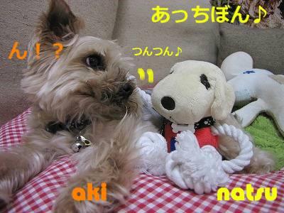 IMG_6075s-.jpg
