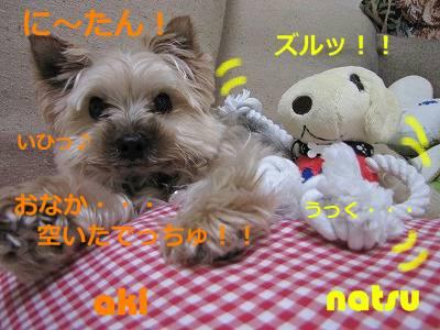 IMG_6077s-.jpg