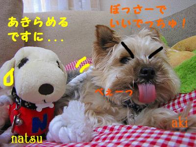 IMG_6179s- のコピー.jpg