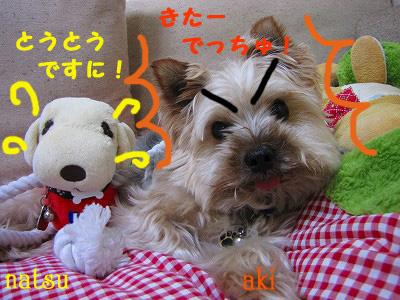 IMG_6184s- のコピー.jpg