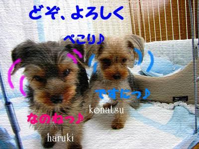 IMG_6961s- のコピー.jpg