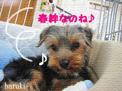 IMG_6972s- のコピー.jpg